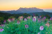 Exotic Summer Sunset And The Mountains (doi Chiang Dao) With Flowers As Foreground, Thailand