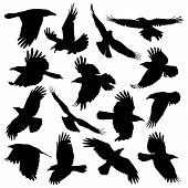Crow silhouette set