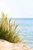 pic of dune grass  - Idyllic scene at the beach with dune grass and blue sea - JPG