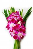 Orchid For Buddhist Religious Ceremony.