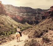 Horse hiking in Grand Canyon