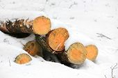 wooden logs under snow in winter forest