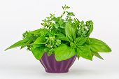 Fresh Herbs In A Bowl