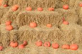 Pumpkins On A Farm