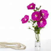 foto of petunia  - Bouquet of pink petunias in a vase on a white background and a pearl necklace - JPG