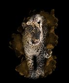 Watercolor Digital Painting Of  Leopard On Black Background