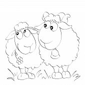 Two funny sheep