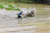 Asia Farmer Using Tiller Tractor In Rice Field