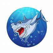 Images evil shark