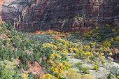 Autumn In Zion Np