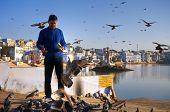 Indian man feeding Pigeons in Pushkar, Rajasthan, India.