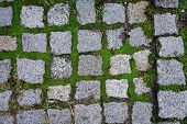 Square cobblestones with moss growing