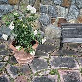 Ceramic Pot With White Roses On Tile Background