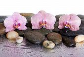 Pebbles And Orchids On Wet Background