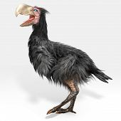 Gastornis (Terror Bird)