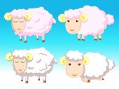 Pink and White Sheeps