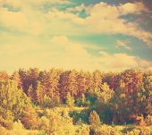green forest, blue sky. beautiful summer landscape, retro filtered, instagram style, soft focus
