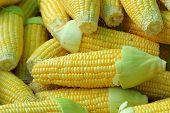 Sweet Corn In The Market