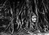 buddha head and bayan tree root in wat mahathat temple Ayutthaya important unesco world heritage sit