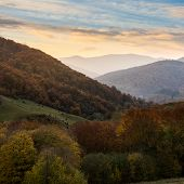 Autumn Forest On A  Mountain Slope