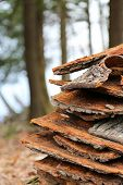 Campfire Wood Bark Stacked