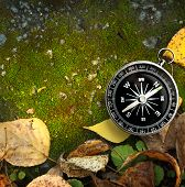 Compass On Autumn Foliage
