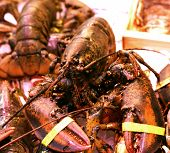 Lobster Homarus Gammarus Nephropidae Mediterranean Sea Food Fresh Fish On Ice Barcelona Market