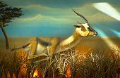 Running antelope