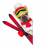 Dog Ski Winter