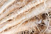 pic of ginseng  - many fresh ginseng plant image on stock photo