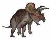 Triceratops dinosaur standing up - 3D render