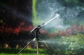 picture of water shortage  - Watering with a sprinkler in a botanical garden - JPG