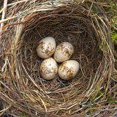 Bird Nest.