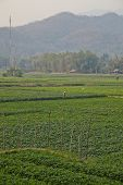 Rice fields in the mountains of Thailand