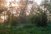 Sunny Morning In The Summer Woods