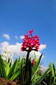 Red Flowers Against The Sky