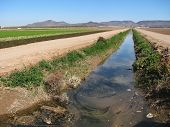 Dirty Irrigation Ditch