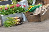 Planting Bulbs Flowers