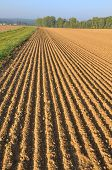 Furrows In Land