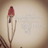 instagram of beautiful wild bird with quote