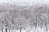 Above View Of Snowbound Forest In Winter
