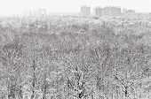 Snow Forest And City In Winter Snowfall