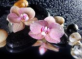 Orchid Flowers And Stones With Reflection