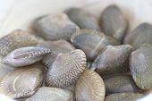 Freshness Of Shellfish.