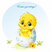 Young vector spring yellow chick in egg