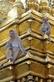stock photo of macaque  - Two macaques on top of chorten in Swayambhunath Kathmandu Nepal - JPG