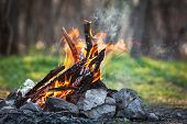 picture of bonfire  - Bonfire in the spring forest - JPG