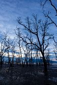 pic of tide  - Dead forest at muddy beach at twilight low tide - JPG
