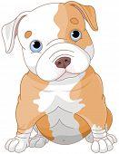 stock photo of pitbull  - Illustration of cute Pitbull puppy - JPG