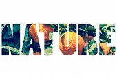 foto of valencia-orange  - Word NATURE over orange fruit on the tree - JPG